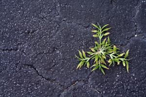 Plant Growing In Cracked Asphalt - Vitality Symbol
