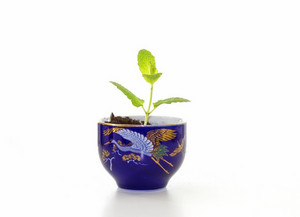 Plant In Pot 194