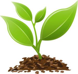 Plant Life Lite Plus Icon