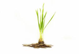 Plant Money Concept