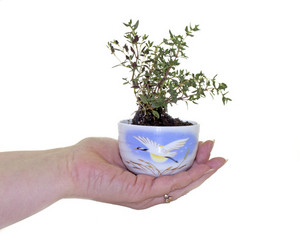 Plant Pot In Hand