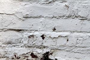 Plaster 4 Texture