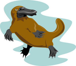 Platypus Front View