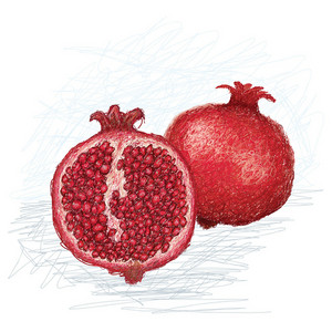 Pomegranate Cross Section