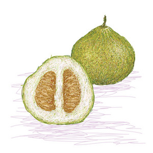 Pomelo With Cross Section