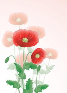 Poppy. Vector