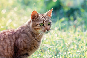 Portrait of a cat on green background