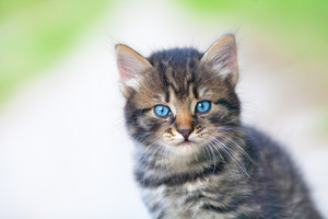Portrait of a small kitten
