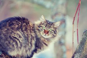 Portrait of cat on the tree