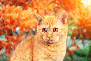 Portrait of cat walking in the autumn garden