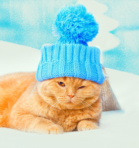 Portrait of cat wearing a cap with pompom