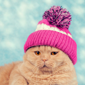 Portrait of cat wearing a knitted cap with pompom