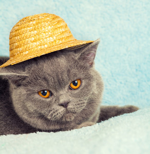Portrait of cat wearing straw hat