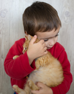 Portrait of child holding yellow kitty cat