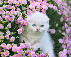 Portrait of cute kitten in flowers