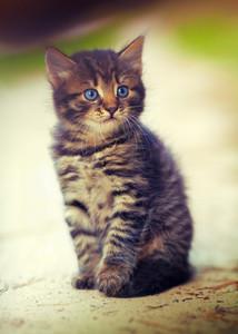 Portrait of cute little kitten