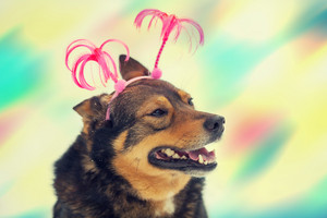 Portrait of dog wearing Christmas headband