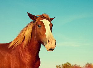 Portrait of horse outdoors