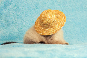 Portrait of kitten wearing straw hat
