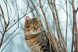 Portrait of tabby cat outdoors in winter