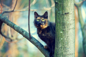 Portrait of the cat on a tree
