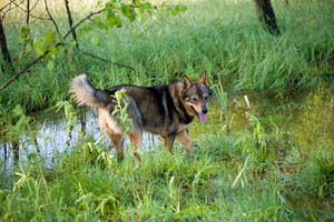 Portrait of the dog walking near the creek