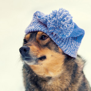 Portrait of the dog wearing knitted hat in winter