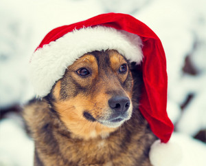 Portrait of the dog wearing Santa hat in the snow