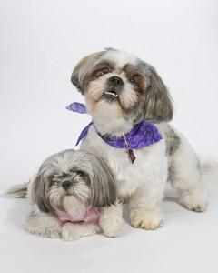 Portrait of Two Happy Puppies