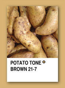 Potato Tone Brown. Color Sample Design