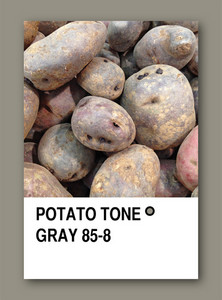 Potato Tone Gray. Color Sample Design