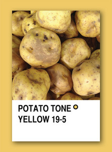 Potato Tone Yellow. Color Sample Design