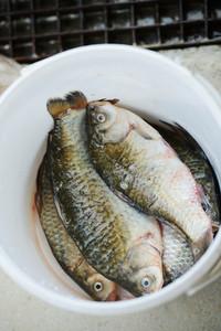 Preparation of marine fish