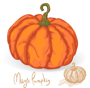 Pumpkin. Vector.