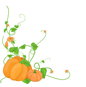 Pumpkin Vegetable Vine Vector