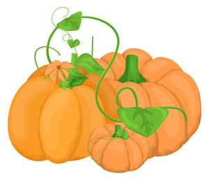 Pumpkins Vectors