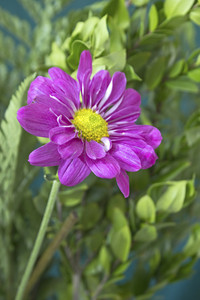 Purple Flower Plant