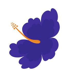Purple Lily Blossom