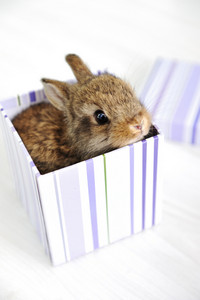 Rabbit cute baby as surprise in box