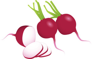 Radishes. Vector. Easy To Edit, No Gradient Meshes Used.