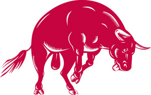 Raging Bull Charging Attacking