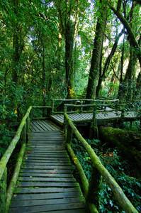 Rain forest at Doi intanon Chiang Mai