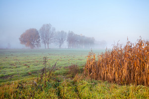 Rainy foggy morning across field in the countryside