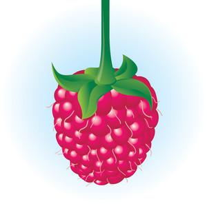 Raspberry. Vector.