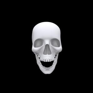 Realistic Halloween Skull