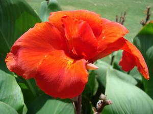 Red Flower In Garden Background