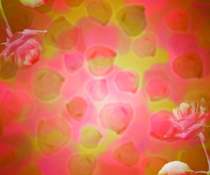 Red Flowers Abstract Background