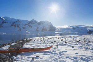 Red kayak amid a flock of penguins on a sunlit, snowy coast
