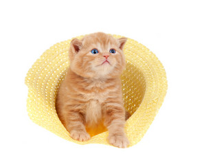 Red kitten sitting in a straw hat