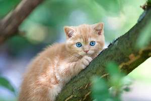 Red kitten sitting on a tree.